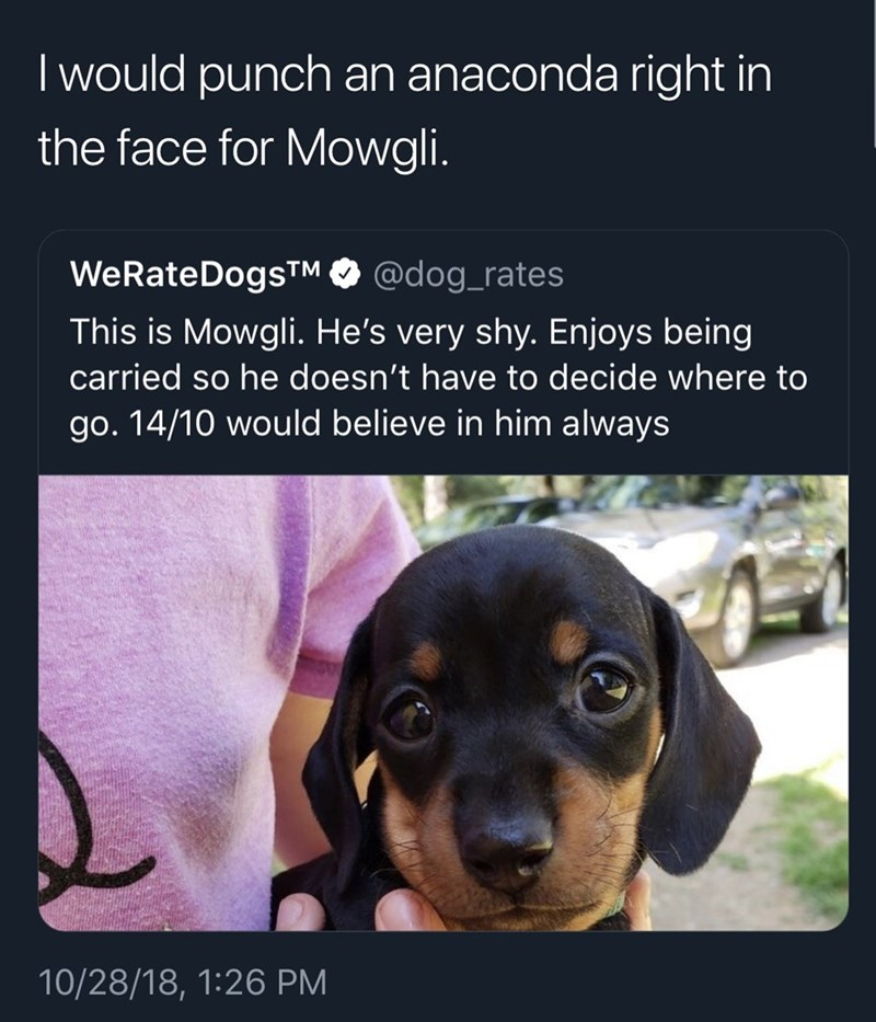 funny tweet - Dog - I would punch an anaconda right in the face for Mowgli. WeRate DogTM @dog_rates This is Mowgli. He's very shy. Enjoys being carried so he doesn't have to decide where to go. 14/10 would believe in him always 10/28/18, 1:26 PM