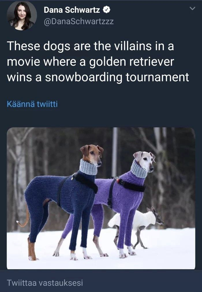 funny tweet - Dog - Dana Schwartz @DanaSchwartzzz These dogs are the villains in a movie where a golden retriever wins a snowboarding tournament Käännä twiitti Twiittaa vastauksesi