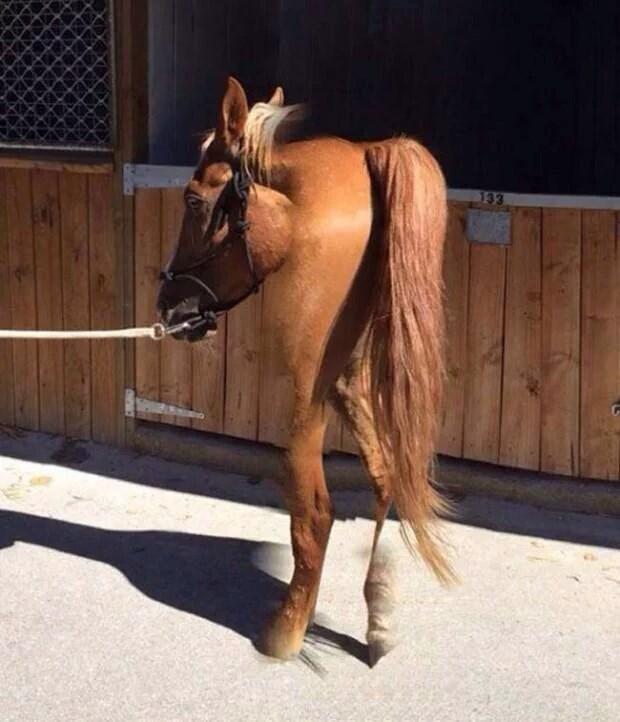 Horse - 133