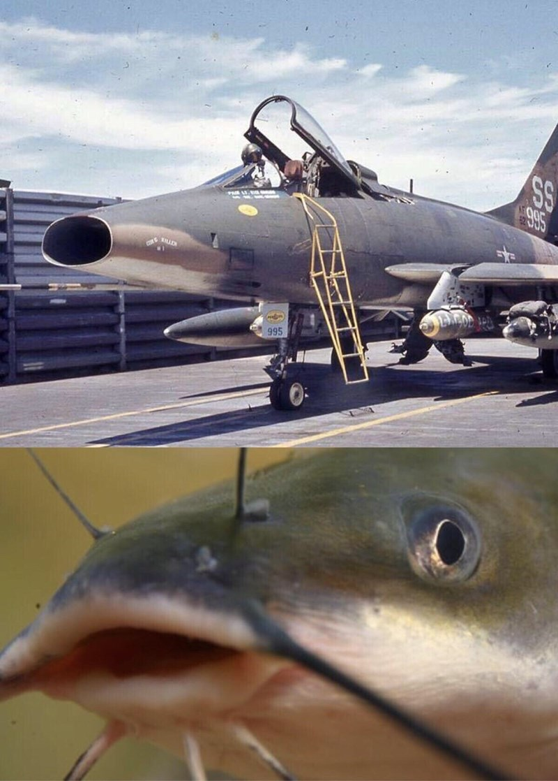 pic of a fighter aircraft that looks like a catfish