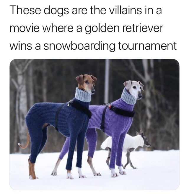 """Caption that reads, """"These dogs are the villains in a movie where a golden retriever wins a snowboarding tournament"""" above a pic of two greyhounds wearing silly-looking sweater suits"""