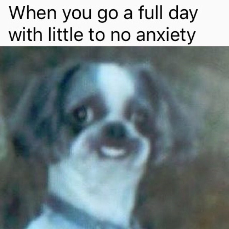 meme about surviving a day without getting anxious with pic of dog smiling awkwardly with teeth