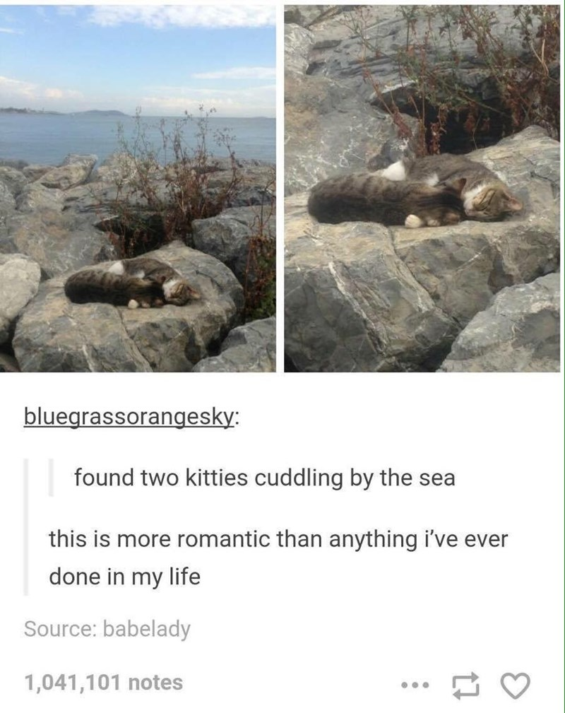 Tumblr thread about romantic cat couple sleeping on a rock by the sea