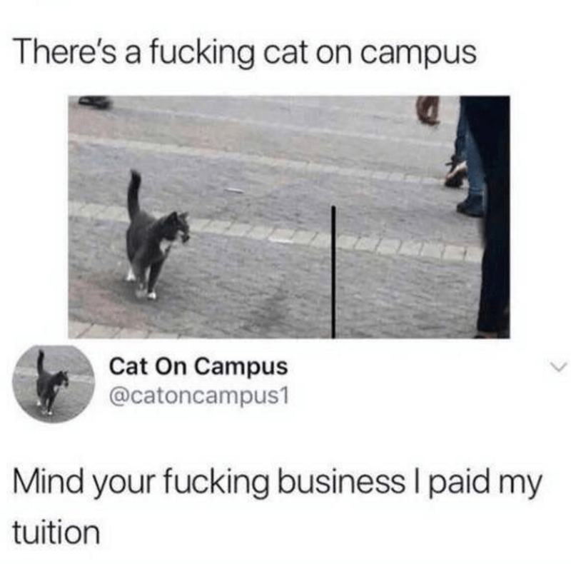 Twitter account of a cat who is a legitimate student of a university