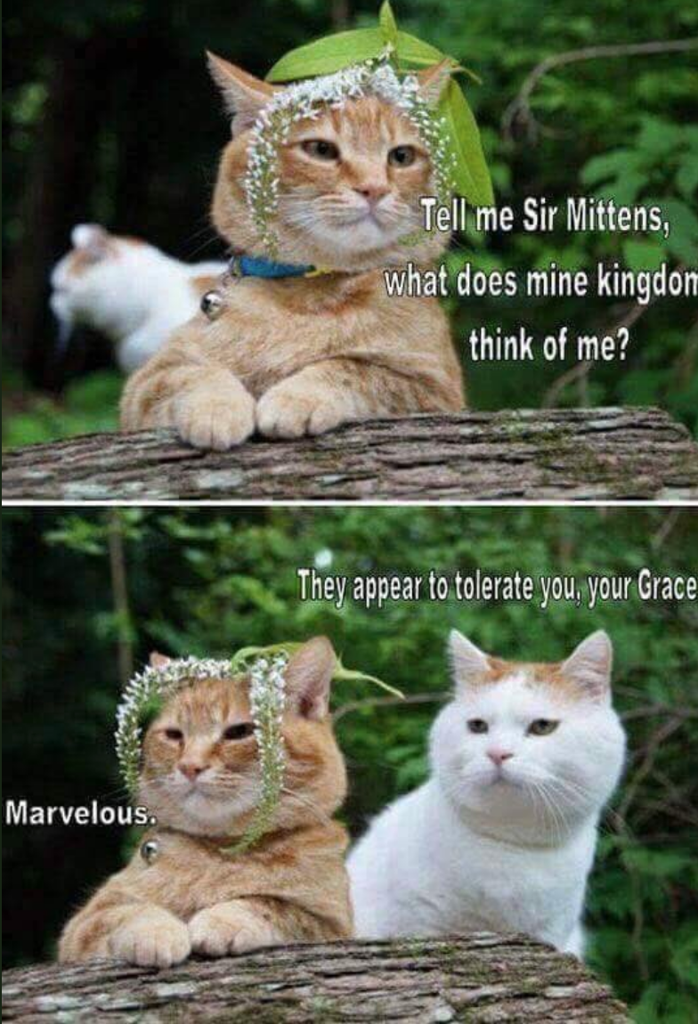 meme about a cat king wondering what his subjects think of him