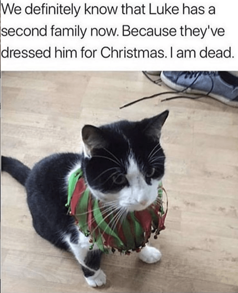 meme about discovering your cat has a second family with pic of cat wearing an outfit his owner didn't put on him