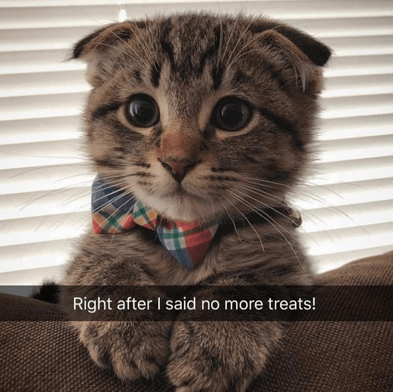 meme about not giving treats with pic of sad cat