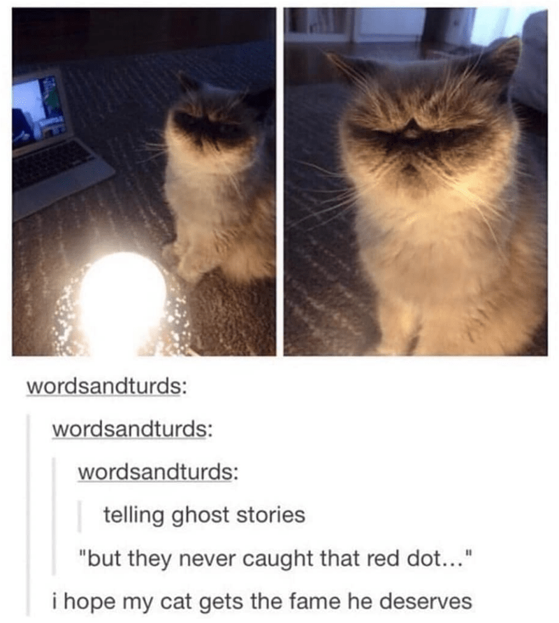 Tumblr thread with pics of cat telling ghost stories in the dark