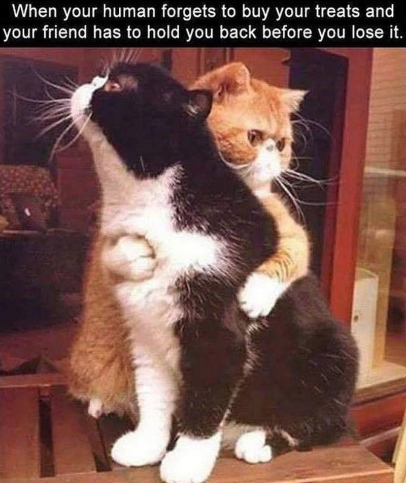 pic of cat holding another cat back from lashing out at forgetful owner