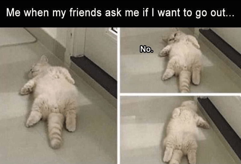 meme about being too lazy to go out with pics of cat laying on it back on the floor