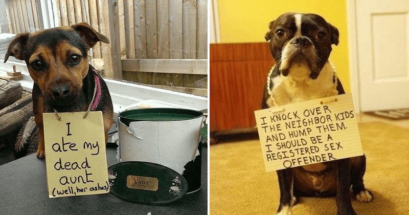 Funny pics of dogs being shamed.