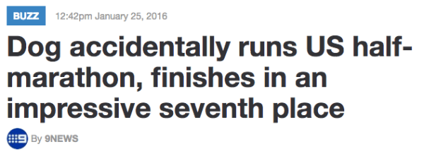 Text - BUZZ 12:42pm January 25, 2016 Dog accidentally runs US half- marathon, finishes in an impressive seventh place By 9NEWS