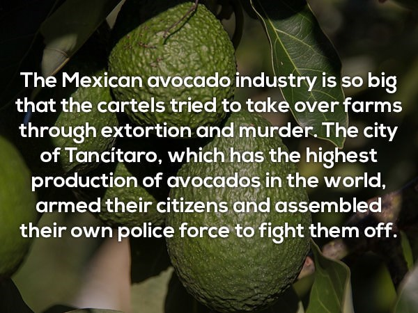 Adaptation - The Mexican avocado industry is so big that the cartels tried to take over farms through extortion and murder. The city of Tancitaro, which has the highest production of avocados in the world, armed their citizens and assembled their own police force to fight them off.