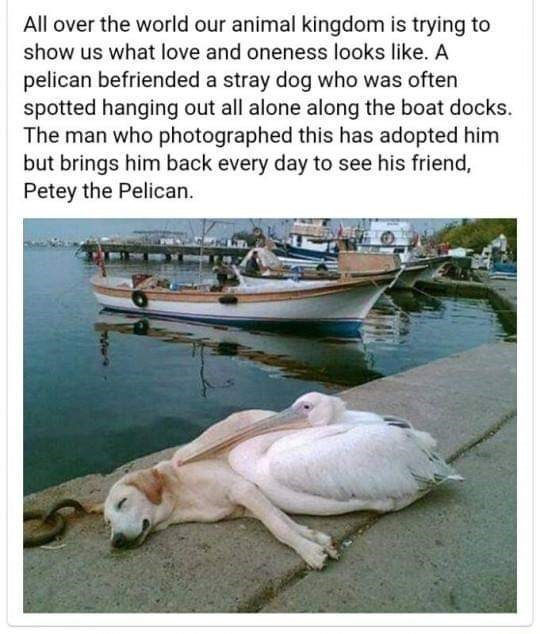 post of a dog and a pelican who are best friends