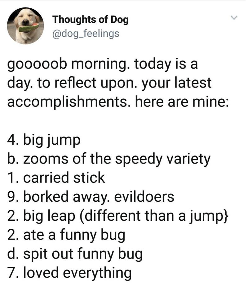 tweet listing the accomplishments of a dog