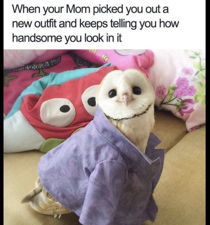 meme about letting your mom dress you with pic of owl smiling inside a collared shirt