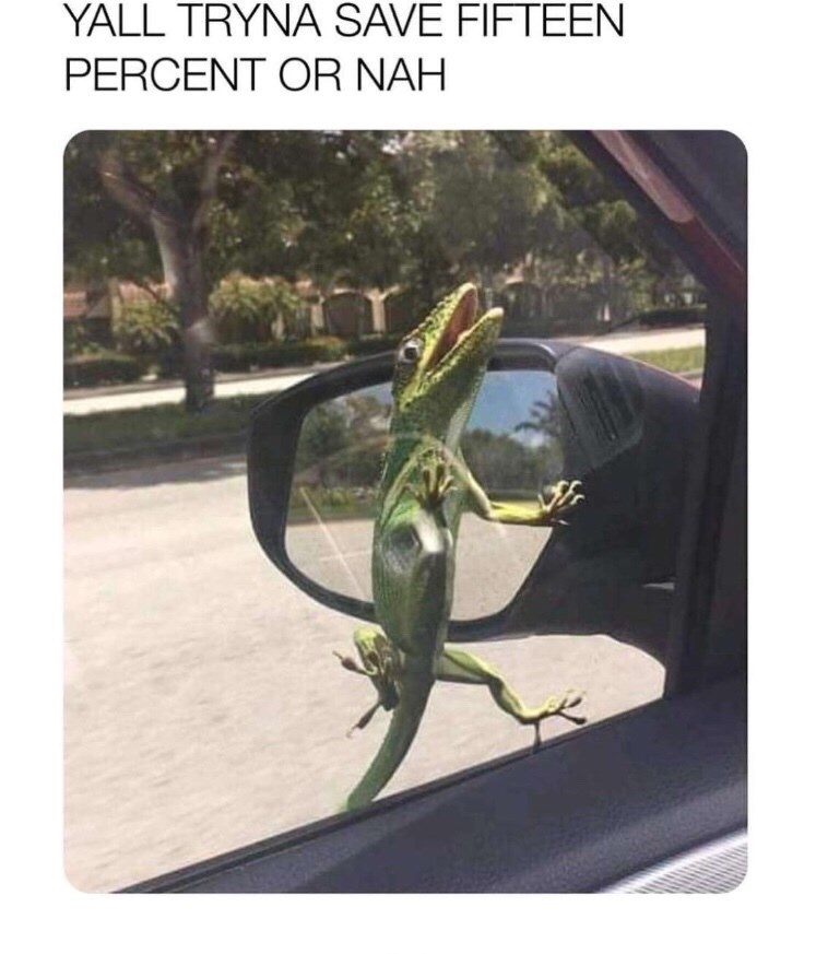 "Caption that reads, ""Y'all tryna save 15% or nah"" above a pic of a gecko stuck to a moving car's window"