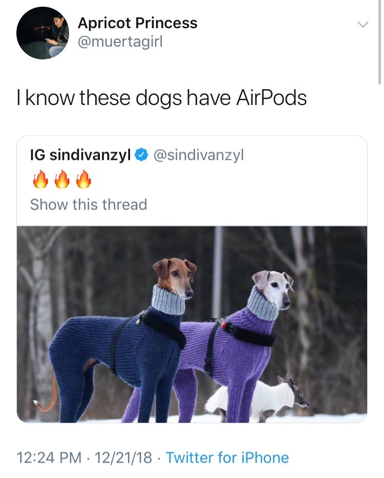 Vertebrate - Apricot Princess @muertagirl Iknow these dogs have AirPods IG sindivanzyl@sindivanzyl Show this thread 12:24 PM 12/21/18 Twitter for iPhone