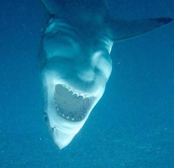 creepy Pic of the underside of a shark that looks like a guy laughing