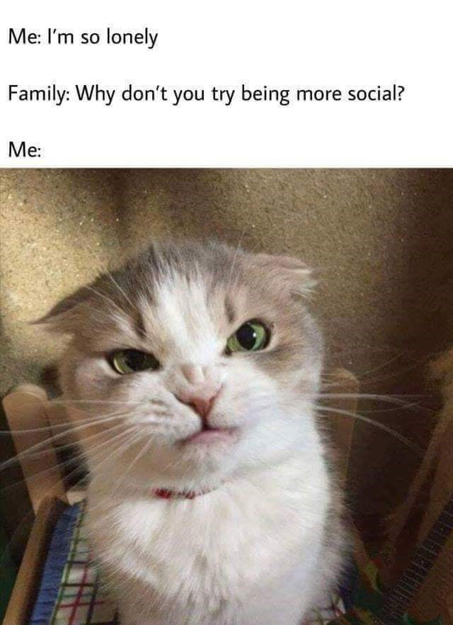 meme about being lonely but not wanting to interact with people with pic of angry cat