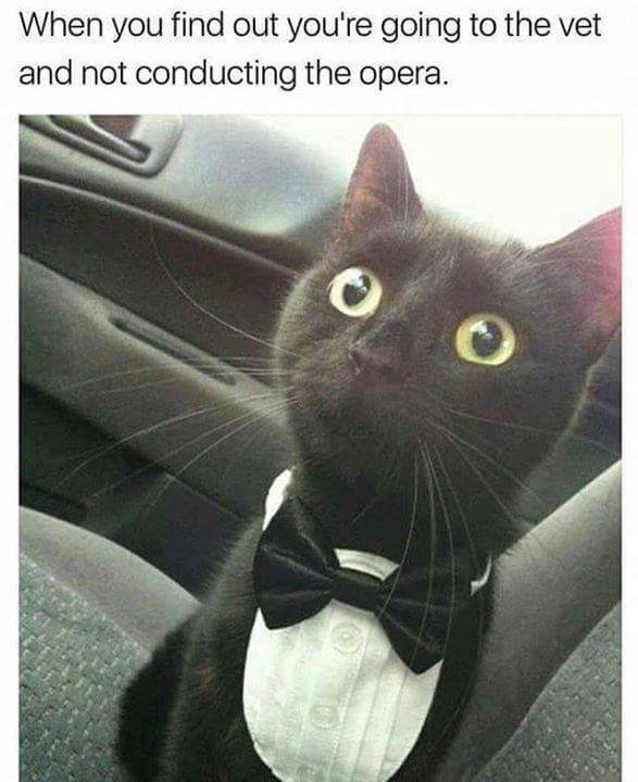 meme about tricking cat into going to the vet with pic of cat in tuxedo