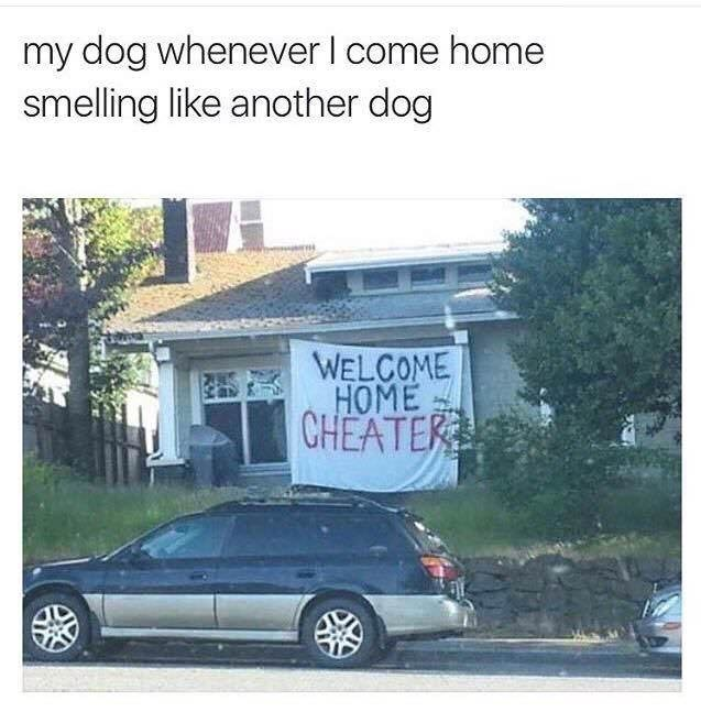 "meme about cheating on your dog with pic of house with a large ""cheater"" sign draped on it"