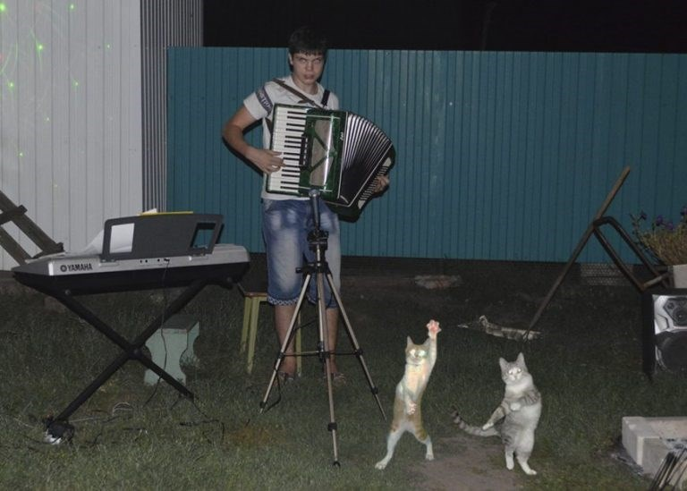cursed image of two cats dancing to a man playing an accordion