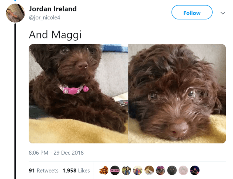 Dog - Jordan Ireland Follow @jor_nicole4 And Maggi 8:06 PM 29 Dec 2018 91 Retweets 1,958 Likes >