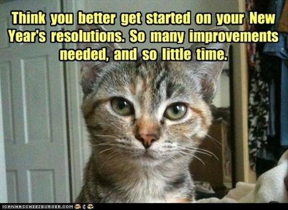 Cat - Think you better get started on your New Year's resolutions. So many improvements needed, and so little time. ICANHASCHEEZBURGER.COM