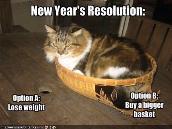 Cat - New Year's Resolution: Option B Buy a bigger basket Option A: Lose weight OANHASOHEEEEUROEK.COM