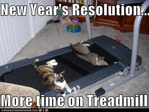 Cat - New Vear's Resolution.. More time on Treadmill onyloge ICANHASCHEE2EURGER COM