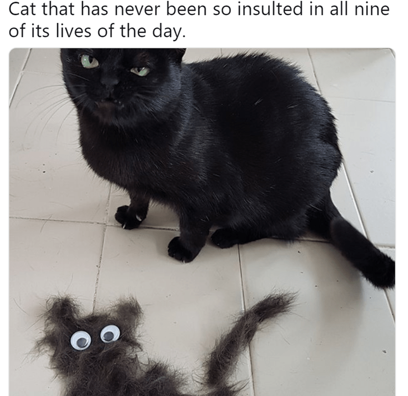 pic of black cat glaring angrily at the camera next to hair piles shaped like a cat with googly eyes