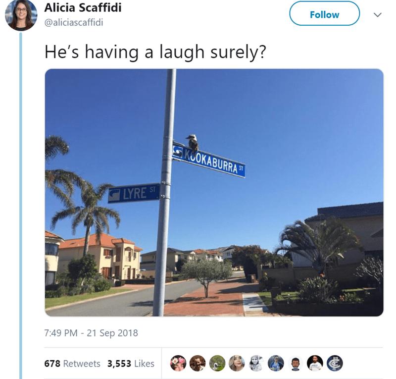 """pic of kookaburra bird sitting on top of a street sign that read """"kookaburra"""""""