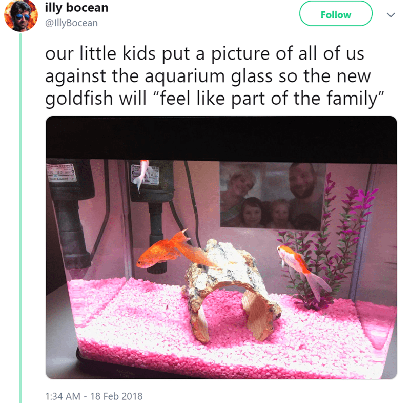tweet of a pic of an aquarium with the family's photo taped to the glass
