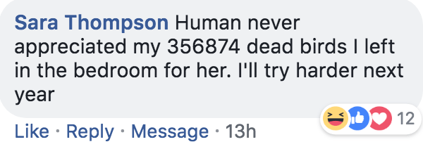 Text - Sara Thompson Human never appreciated my 356874 dead birds I left in the bedroom for her. 'll try harder next year 12 Like Reply Message 13h