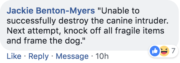 "Text - Jackie Benton-Myers ""Unable to successfully destroy the canine intruder. Next attempt, knock off all fragile items and frame the dog."" 7 Like Reply Message 10h"