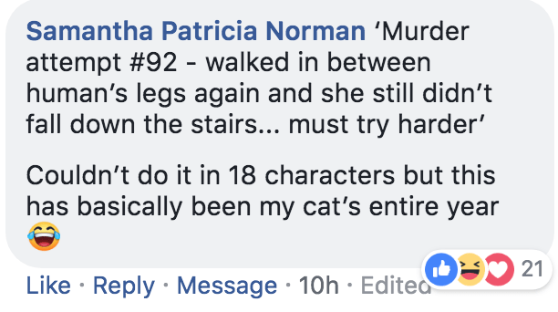 Text - Samantha Patricia Norman 'Murder attempt #92 - walked in between human's legs again and she still didn't fall down the stairs... must try harder' Couldn't do it in 18 characters but this has basically been my cat's entire year 21 Like Reply Message 10h Edited