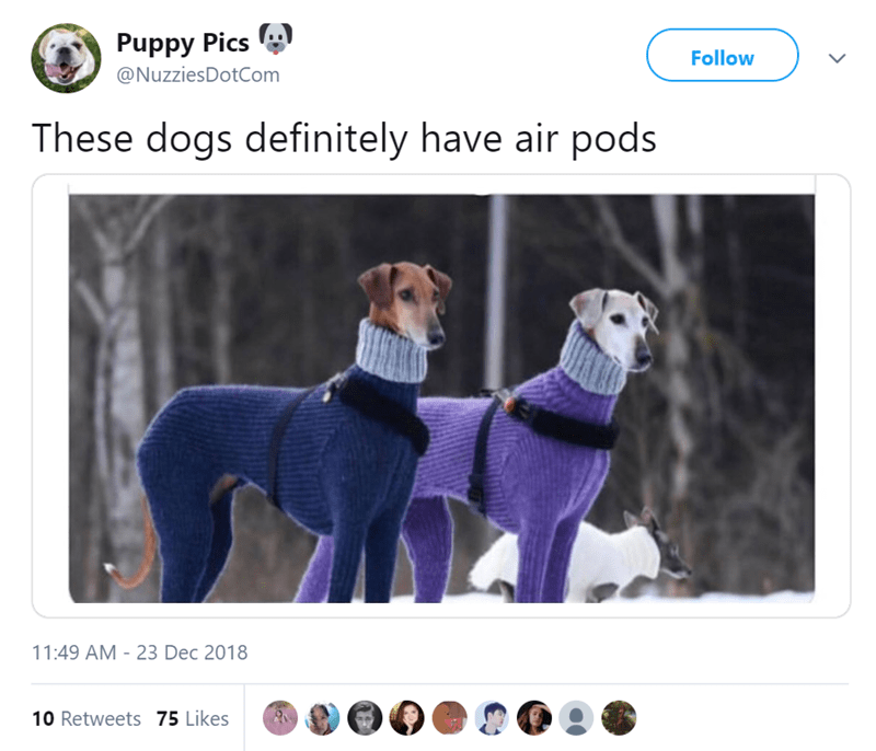 Dog - Puppy Pics Follow @NuzziesDotCom These dogs definitely have air pods 11:49 AM - 23 Dec 2018 10 Retweets 75 Likes
