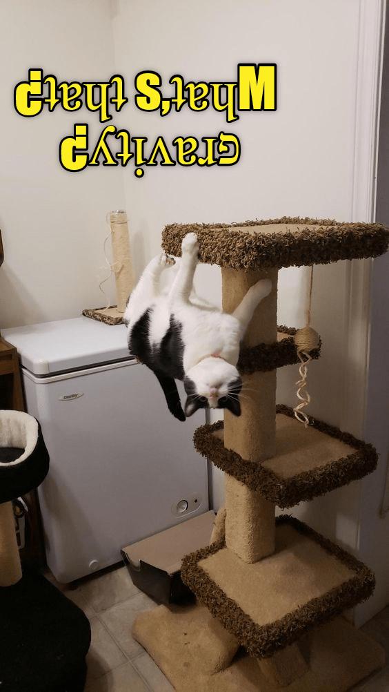 cat meme - Cat - ny Gavity? bats that