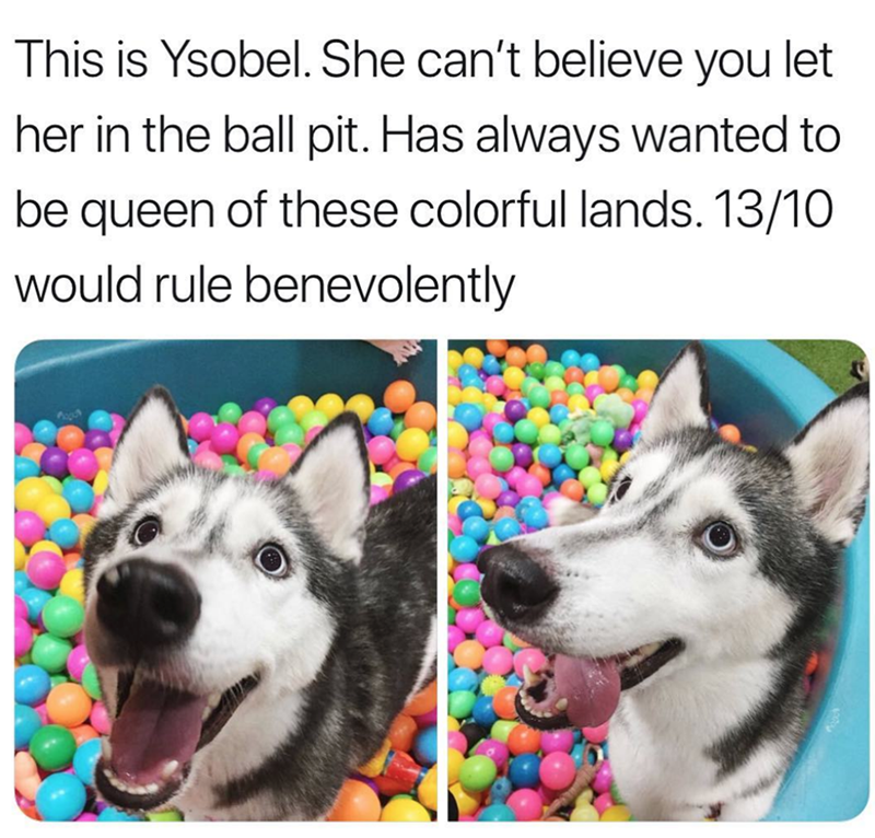 Mammal - This is Ysobel. She can't believe you let her in the ball pit. Has always wanted to be queen of these colorful lands. 13/10 would rule benevolently