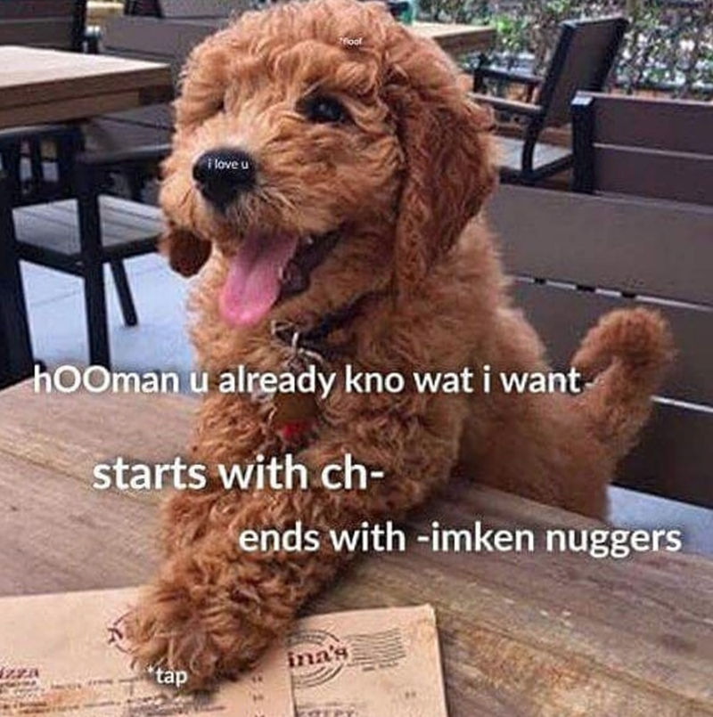 Dog - fool ilove u hooman u already kno wat i want starts with ch- ends with -imken nuggers ina's tap