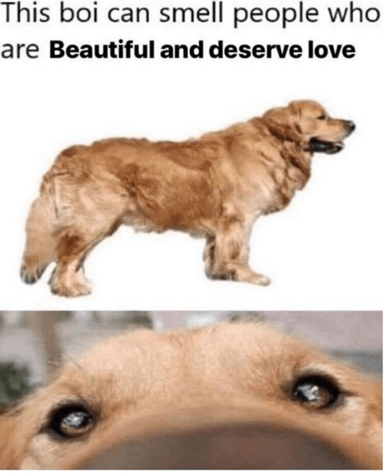 Dog - This boi can smell people who are Beautiful and deserve love