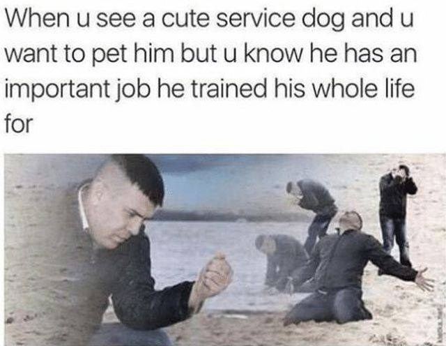 Text - When u see a cute service dog and u want to pet him but u know he has an important job he trained his whole life for