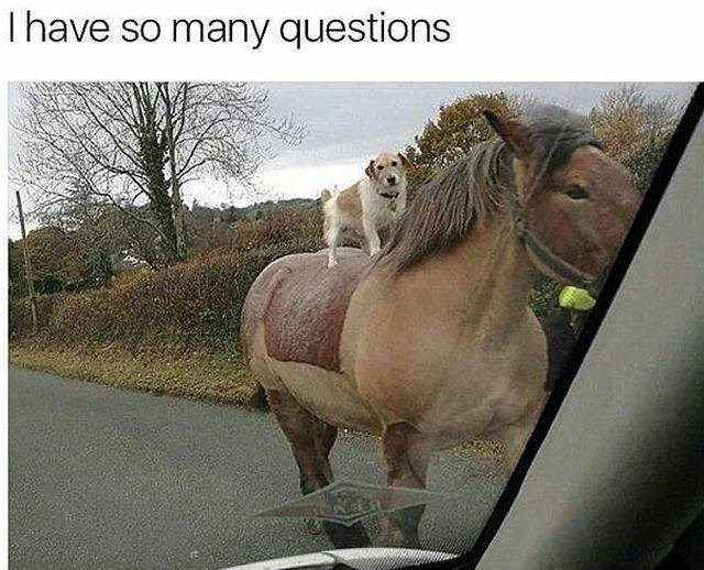 Horse - I have so many questions