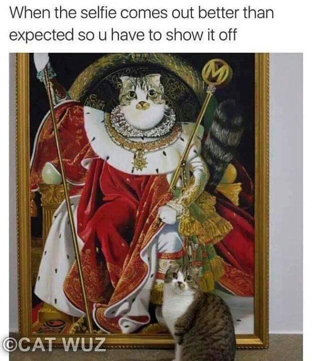 funny cat memes selfie Cats cat memes - 9254704128