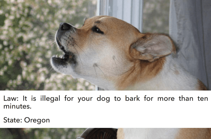 Dog breed - Law: It is illegal for your dog to bark for more than ten minutes. State: Oregon