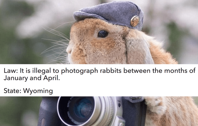 Snout - Law: It is illegal to photograph rabbits between the months of January and April State: Wyoming