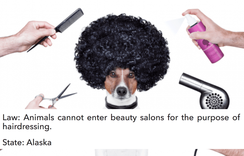 Hair - Law: Animals cannot enter beauty salons for the purpose of hairdressing. State: Alaska