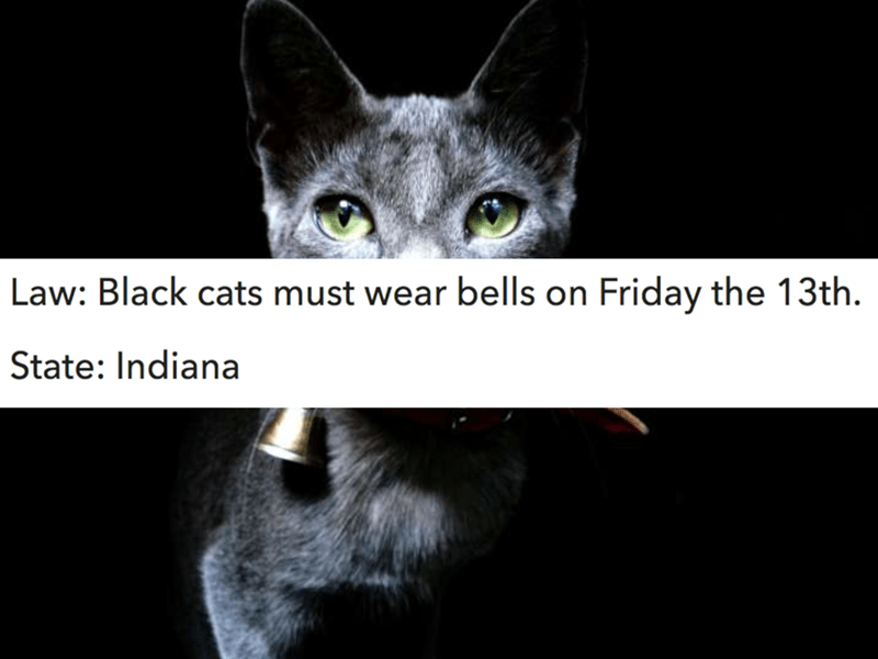 Cat - Law: Black cats must wear bells on Friday the 13th. State: Indiana