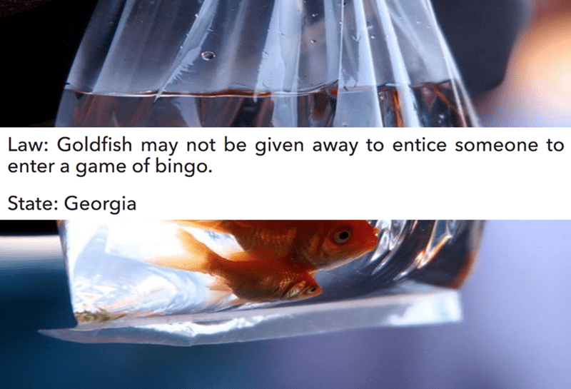 Water - Law: Goldfish may not be given away to entice someone to enter a game of bingo. State: Georgia